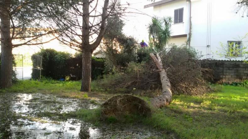 la responsabilità di danni causati dalle piante