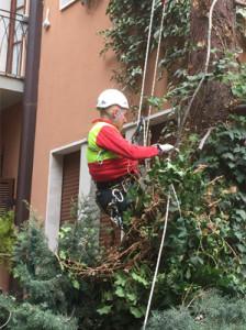 TreeClimbing011